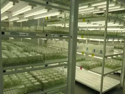 Gwalior Potato Tissue Culture Lab